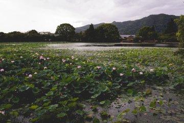 Osawa-no-ike Pond, Kyoto