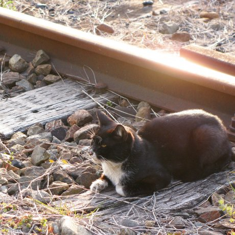 ท่องเที่ยวชมสัตว์ที่น่าสนใจในญี่ปุ่น