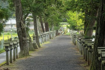 <p>Looking down the omotesando of Mii Shrine toward the entrance torii</p>