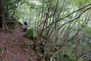 <p>Along the Suigen no Mori Hiking Trail</p>