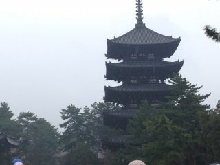 The five-story pagoda in the distance, at Kōfuku-ji