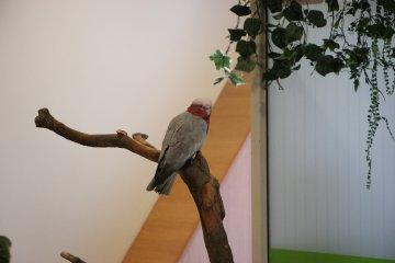<p>Попугай приветствует посетителей зоопарка</p>