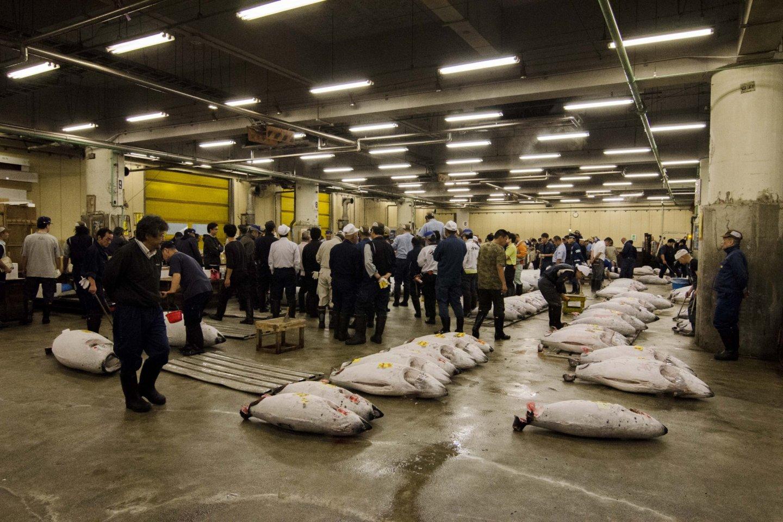 مزاد التونة