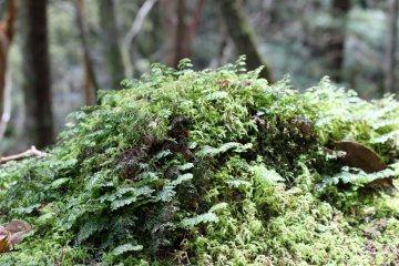 <p>Moss on the rocks mirrored the forest above</p>