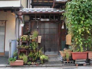 Serunya jalan-jalan di musim panas, kita bisa menikmati asrinya pekarangan rumah warga di Kyoto.