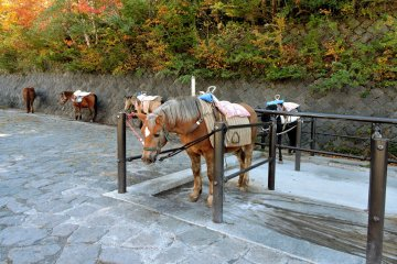 <p>There were horses giving tourists rides along the trail</p>