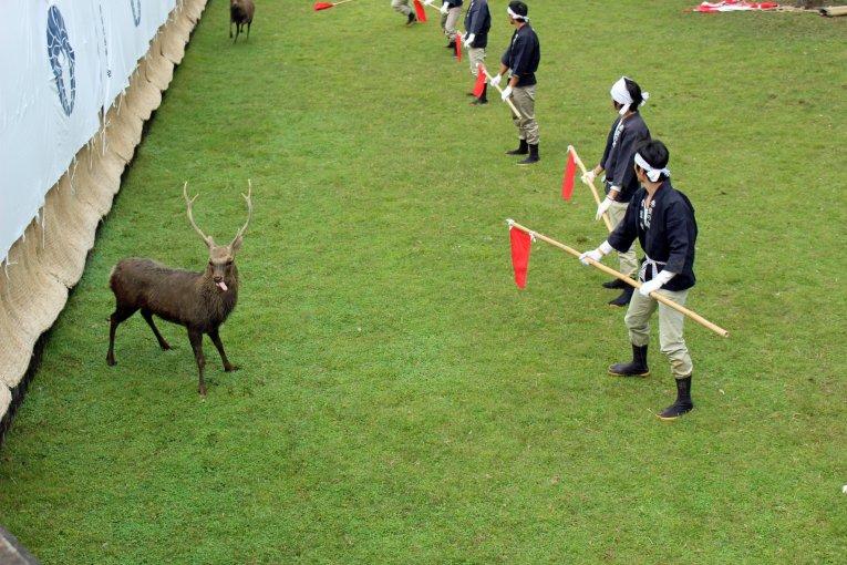 Nara Deer Antler-Cutting Ceremony