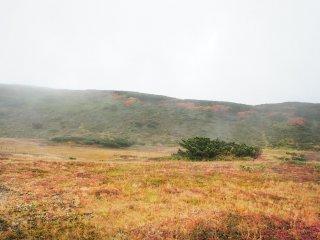 Rumput yang menguning di Gunung Asahidake.