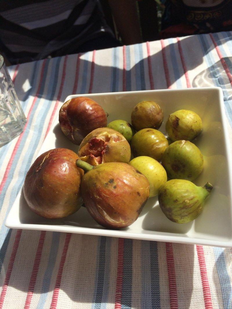 <p>Fresh figs!</p>