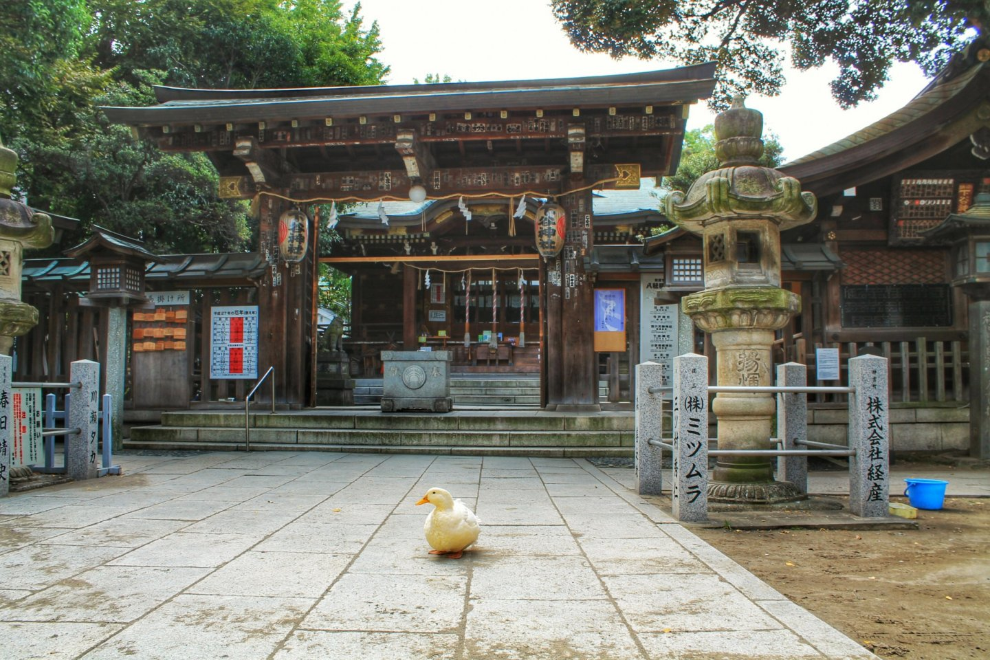 The main building of Shitaya Shrine and the goose in front