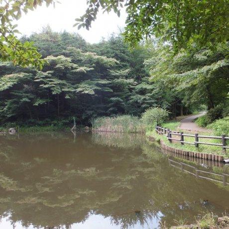 Walking Yokohama Parks & Waterways