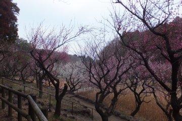 <p>Makigahara Park</p>