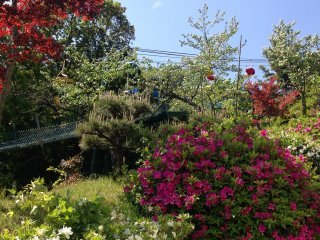 Various flowers and shrubs dot the path from the cable car to Kasamatsu Park.