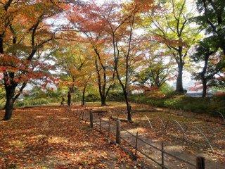Fall foliage at the Komoro Castle ruins