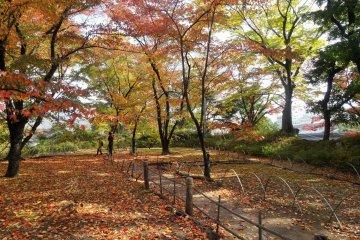 <p>Осенняя листва в руинах замка Коморо</p>