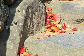 <p>Ковер из красных листьев на ступеньках к замковому храму</p>