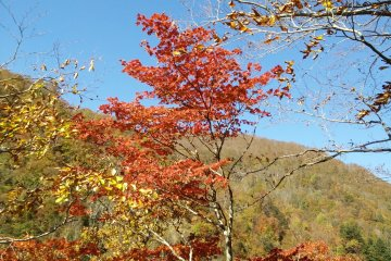 <p>The area is famed for its autumn colors</p>