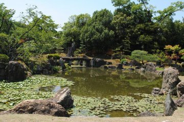 The pond in the main garden