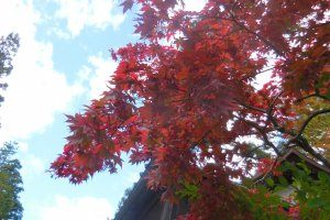 fall in nikko