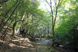 The Yagyu Kaido/Takisaka no Michi. The rocks of the path could be quite slippery even when it wasn't raining
