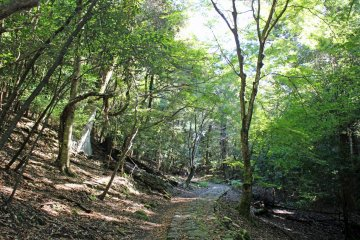 <p>The Yagyu Kaido/Takisaka no Michi. The rocks of the path could be quite slippery even when it wasn&#39;t raining</p>
