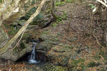 <p>The stream along the trail created an very soothing soundscape</p>