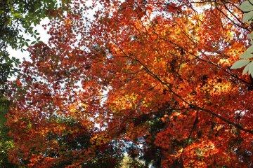 <p>Autumn foliage brightened the hike in numerous locations &nbsp;</p>