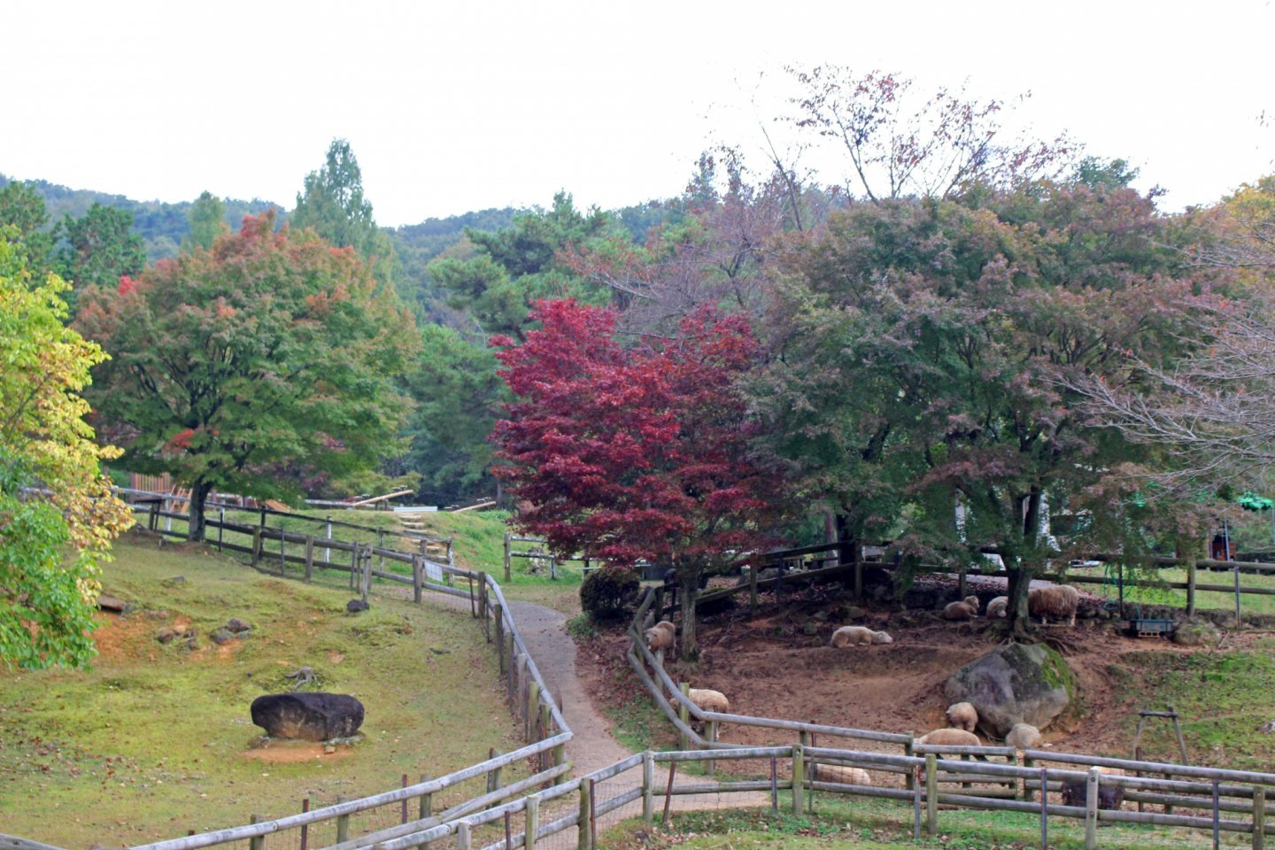 Autumn foliage at the Mémé Makiba's sheep pen. The Mémé Makiba is a small farm that allows visitors to feed and pet the animals and see how wool is turned into yarn and finished goods