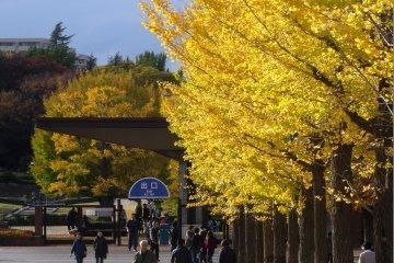 ฤดูใบไม้ร่วงที่สวน Showa Kinen