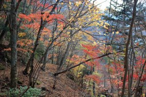 The autumn foliage and unsullied nature of Nara Prefecture's Mitarai Canyon is only accessible by bus (without a car).