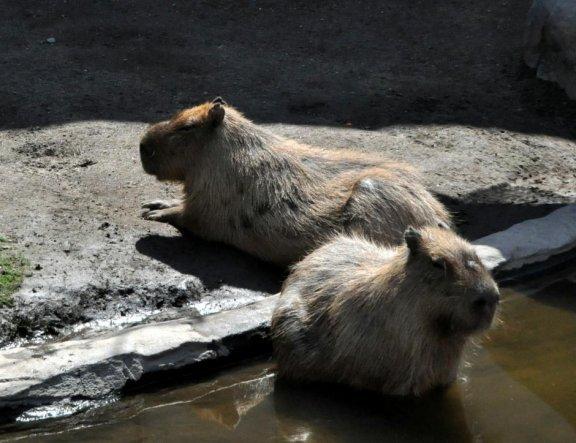 Vườn thú Asahiyama, Asahikawa
