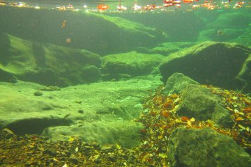 <p>Japanese mountain fish make their home in a clear pool at the top of the Mitarai Falls</p>