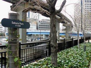 В этом парке весной красиво цветет сакура