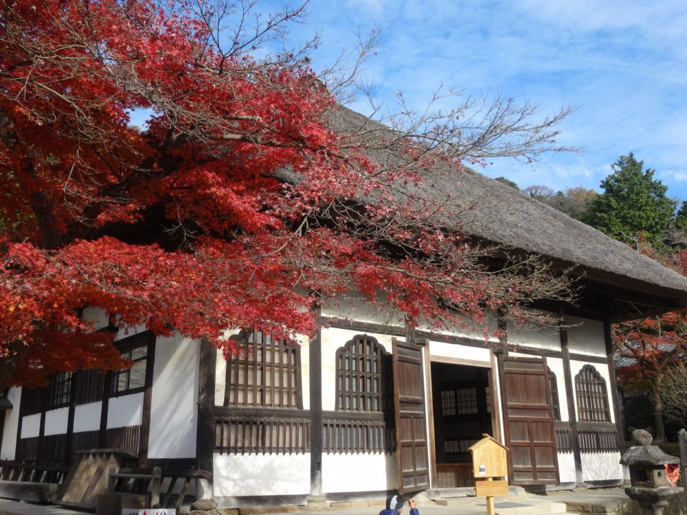 A maple tree frames one of the sub-temple