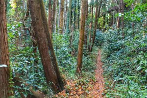 Узко, лесисто и красиво