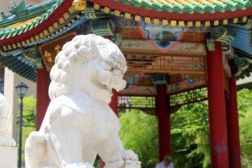 Roar! Roar! Roar! Said the Lion...