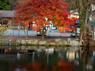 The same maple tree from an angle conducive to reflections