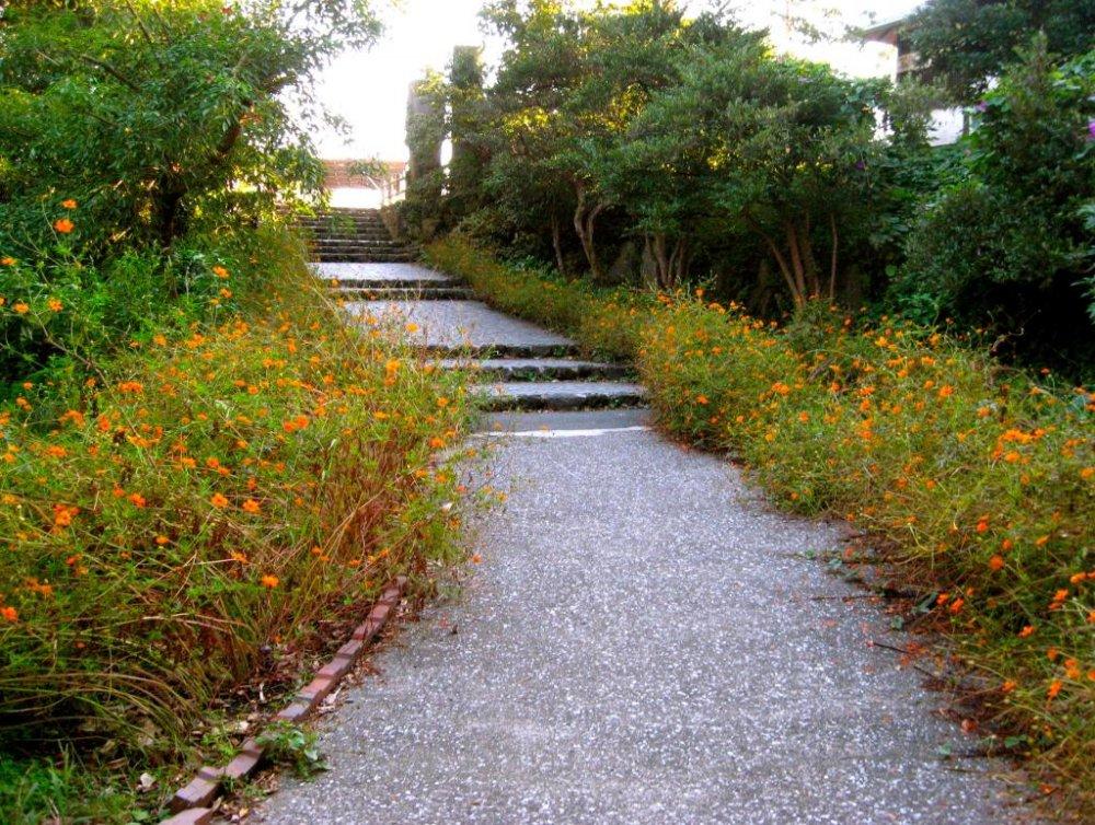 Начало восхождения на побережье Дзёгасаки