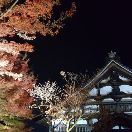 Kodai-ji Fall Illumination in Kyoto