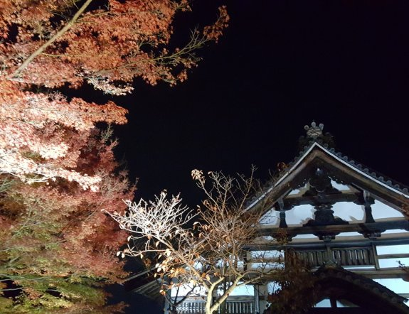 Iluminasi Musim Gugur Kodai-ji di Kyoto