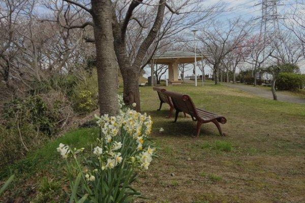 早春の塚山公園