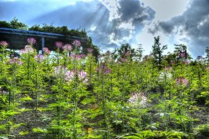 Heavenly light bathing the floral forests
