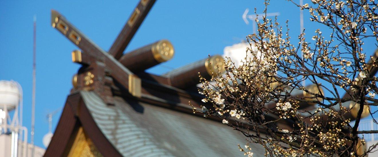 Les fleurs de prunier et le sanctuaire Yushima Tenjin