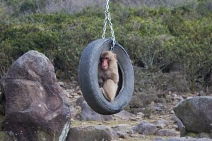Hanging around in the ol' tire swing