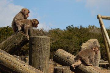 Un grupo de monos moviéndose