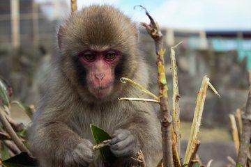 Parque de los Monos Choshikei