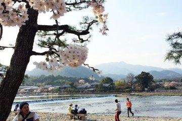 京都的赏樱地点