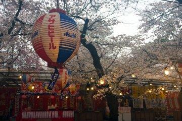 在樱花祭喝着啤酒赏樱花