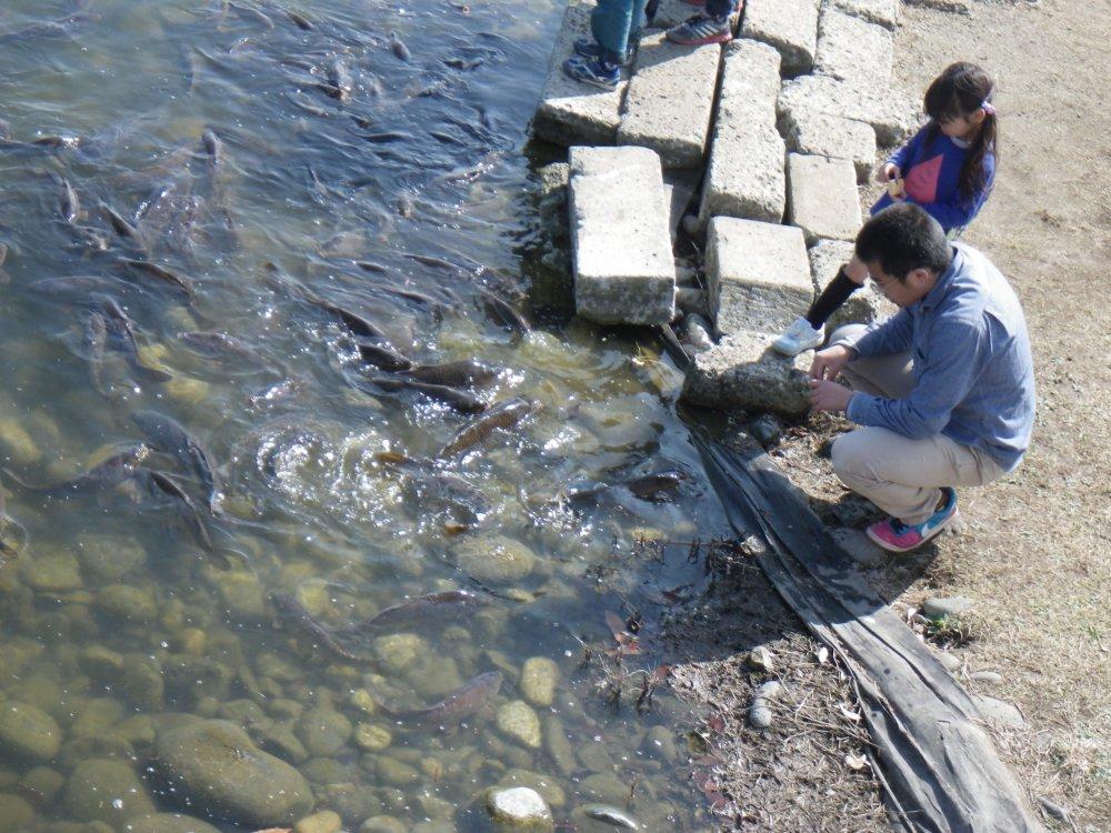 Nakagawa Aquatic Park Tochigi Japan Travel