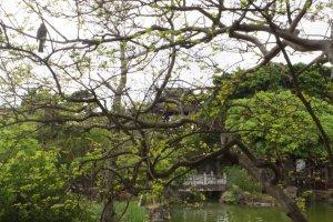 Végétation et architecture en arrière plan